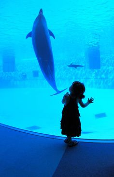 We'll do this when Owen's old enough - who knows which aquarium - but we're big fans of all of them so it'll happen eventually :)