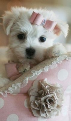 Dear MaryAnne, here is your new sweet puppy.  Love & hugs xo  ~ Blessings ~ Patti