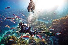 Heron Island diving.