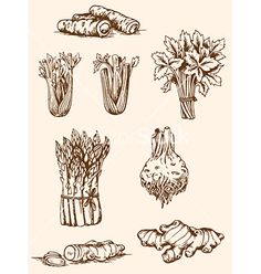 Hand drawn vegetables vector - by Artspace on VectorStock®