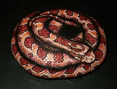 Hand Painted Rock Art  Corn Snake by amylenore on Etsy