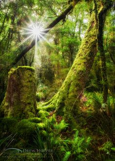 Magical Garden by DrewHopper.deviantart.com on @deviantART