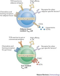 Figure 2: Molecular mediators of tissue-resident TReg cell homeostasis.