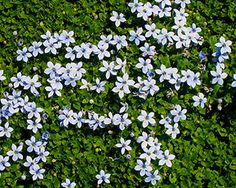Create a Carpet of Color in Your Yard with Groundcovers | Costa Farms