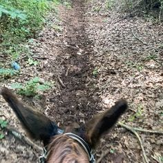"Donkey Listener on Instagram: ""#ridingdonkey another lovely ride on Jasper yesterday at #bakercreek in Greenback. We went a little farther than usual.. I've been…"" Horseback Riding Trails, Donkey, Jasper, Instagram, Donkeys"