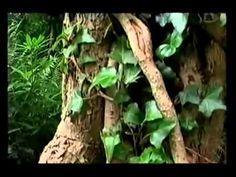 Grave Exhumation Documentary