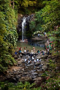 Annandale Falls, Grenada, as viewed from the park entrance during a St. Vacation Destinations, Vacation Spots, Grenada Caribbean, St George's, Inspiration Wall, Future Travel, West Indies, Beautiful Islands, Grenadines