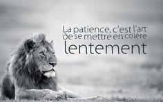 citation drole, fond d'écran d'inspiration animale avec phrase humoristique, photo blanc et noir lion