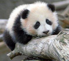 LOVE LOVE LOVE pandas!!!