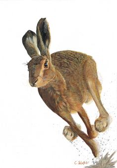 British Hare by Colin Slater