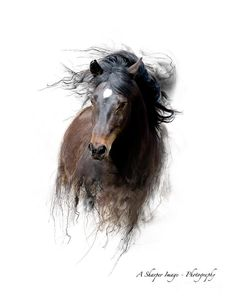 Newforest Stallion Photograph by Linda Finstad