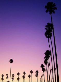 Purple sky & palm tress.