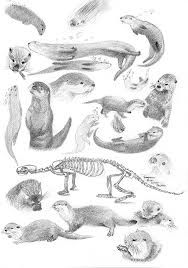 cute otter drawing - Google Search