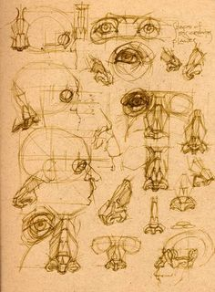 ••• ‡‡‡‡‡‡ ••• The • Book • of • Bones ••• ‡‡‡‡‡‡ ••• - Page 15 Anatomy Sketches, Anatomy Drawing, Anatomy Art, Art Sketches, Drawing Cartoon Faces, Drawing Heads, Life Drawing, Figure Sketching, Figure Drawing Reference