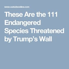 These Are the 111 Endangered Species Threatened by Trump's Wall