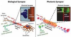 Den artificiella optiska neuron efterliknar nära mekanismen för en biol struktur och arbetar ...