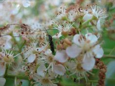 Bug on flowers
