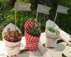 Plants regalos