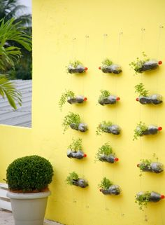 Brazil - Upcycling old drinks bottles to create a wonderful wall-mounted garden.