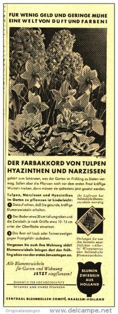 Original-Werbung/Inserat/Anzeige 1950 - BLUMENZWIEBELN AUS HOLLAND/CENTRAL BLOEMBOLLEN COMITÉ HAARLEM - ca. 200 x 70 mm