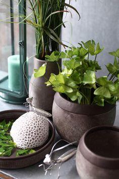 Kollektion Frühjahr & Sommer 2016 - Fachgroßhandel für Floristikbedarf, Deko & Wohnaccessoires Planter Pots, Spring Summer, Home Decor Accessories, Deco, Couple