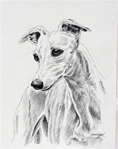 "A Bonny Whippet by Canine Art Pencil ~ 10"" x 8"""