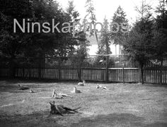Kangaroos at the Zoo in Stanley Park, Vancouver, Canada, 1920s antique photo reprint, vintage photography, animal photo by Ninskaphotos on Etsy https://www.etsy.com/uk/listing/398255349/kangaroos-at-the-zoo-in-stanley-park