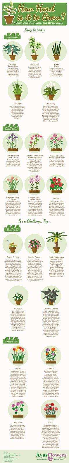 Take a look at this infographic for suggestions on plants that are low maintenance and others that are a fun challenge!