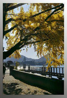como autunno by Beppe maresca, via Flickr