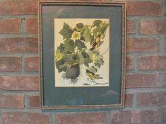 Framed Audubon Baltimore Oriole Full Color Lithograph 40s