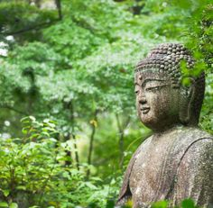 buddah statue in the back yard would be so cool!