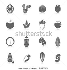 Set of almond hazelnut coconut sunflower seeds and nuts in black style with reflection vector illustration