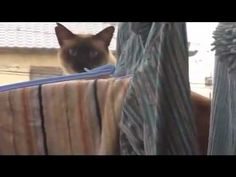 cat feat. awolnation - sail (yourtube).  I literally cried while laughing!!! LOL