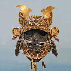 This guy makes suits of armor for cats #armoredcats Guerrero Samurai, Samurai Art, Samurai Helmet, Samurai Warrior, Suit Of Armor, Cat Mouse, Armour, Weapons, Sphynx Cat