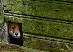 Animal House: Woodland Creatures Adopt Deserted Cabins