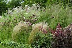 Image result for indigenous garden landscaping midlands kzn