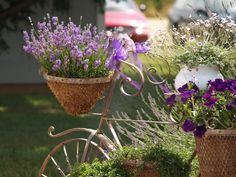Lavender Bicycle Container