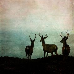 Deer by the Sea | Flickr - Photo Sharing!