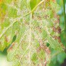 Algunos remedios naturales en agricultura ecológica