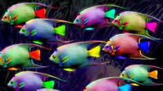 Colorful Fishes In the Sea - Saferbrowser Yahoo Image Search Results