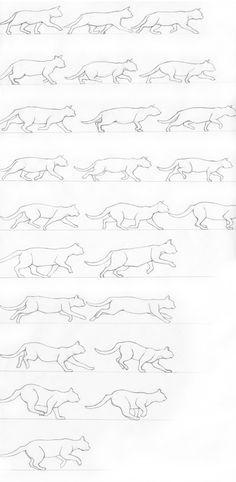 Cat starting a gallop by RenegadeStudios.deviantart.com on @DeviantArt