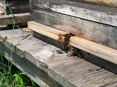 Bienenstock - beehive Beehive, Outdoor Furniture, Outdoor Decor, Wood, Home Decor, Nature, Madeira, Homemade Home Decor, Woodwind Instrument