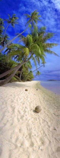 Tropical Beaches With Palm Trees Dream Vacations, Vacation Spots, Italy Vacation, Places To Travel, Places To Go, Travel Destinations, Travel Tours, Coconuts Beach, I Love The Beach