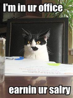 31 Best Office Cats Images Office Cat Cute Cats Funny Animals