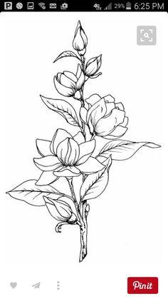 Magnolia Dessin Floral Fleur A Colorier Dessin Fleur 25 Beautiful Flower Drawing Ideas Inspiration Tattoo Design Beautiful Flower Drawing Outline Beautiful Flower Drawings, Flower Line Drawings, Flower Sketches, Beautiful Flowers, Art Drawings, Drawing Flowers, Floral Drawing, Flower Design Drawing, Lotus Drawing
