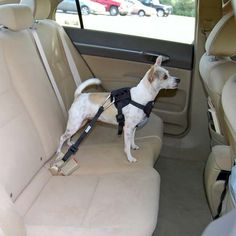 Bergan Auto Harness for dogs - Dog Car Safety Harness