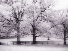 Trees and Fence in Snowy Field Photographic Print by Robert Llewellyn at AllPosters.com