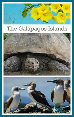 The Galapagos Islands - What you will see! Travel there with WWF: https://worldwildlife.org/tours/galapagos-islands