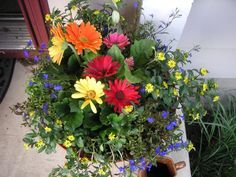 A planter I threw together one year. Center flowers are Gerber Daisies, Blue flowers are Lobelia, and yellow trailing flowers are Sanvitalia.