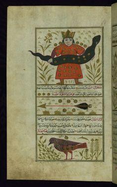 version turque du livre des merveilles de la création par Qazwīnī, Zakarīyā ibn Muḥammad,(1203-1283) Ici encore tout est relié, cosmos, astrologie, pouvoirs temporels, diversité des créatures et mythologies